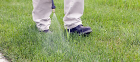 Weed Out Lawn Spray